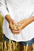 Women's hands holding ears of wheat