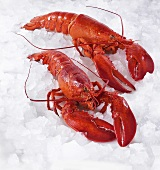 Two cooked lobsters on ice