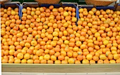 Lots of tangerines in crates at the market