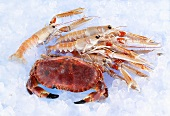 Whole crab and lobster on ice