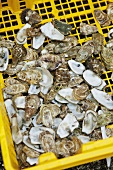 Oyster Shells in a Yellow Crate