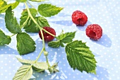Three raspberries with a sprig and leaves