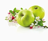 Green apple and branch with apple blossom