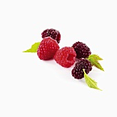 Raspberries and blackberries with leaves
