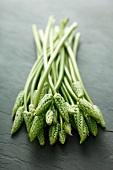 Green wild asparagus