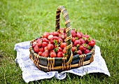 A basket of freshly picked strawberries in a field