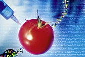 Genetic modification of a tomato