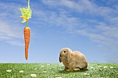 A rabbit with a dangling carrot