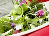 Spring herb salad with yoghurt dressing