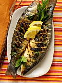 Sea perch, barbecued, with lemon
