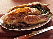 Roast wild duck with herbs