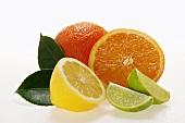 Halbe Zitrone mit Blättern, Orangen und Limettenschnitze