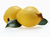 Two quinces with drops of water and leaves