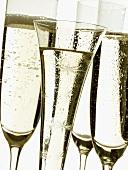 Various champagne glasses