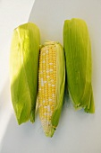 Three corncobs with husks