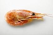 One Whole Shrimp