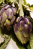 Artichokes with leaves