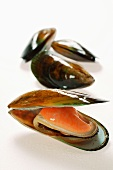 New Zealand mussels, one opened