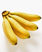 Yellow sugar bananas (finger bananas)