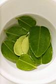 Lemon leaves, soaked in water