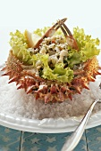Spider crab salad on sea salt