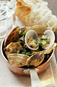 Vongole with garlic and herbs in copper pan