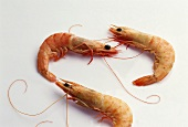 Three cooked, unpeeled shrimps