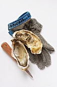 Opened oyster, oyster knife and oyster glove