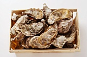 Oysters in a crate