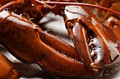 Cooked lobster (detail of claw)