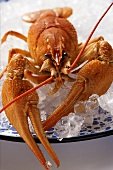 Freshwater crayfish on plate with crushed ice