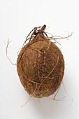 Eine Kokosnuss