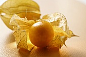 Physalis with calyx on orange background