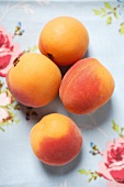Four apricots on floral tablecloth