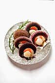 Scallops, opened, on plate with ice
