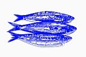 Three sardines, dramatic effect in blue