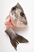 Sea bass head and tail