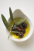Olive oil, black olives and olive branch in bowl