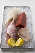 Verschiedene Fischfilets mit Zitrone auf Eis