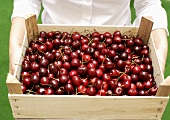 Person holding crate of fresh cherries