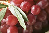 Red grapes with olive branch