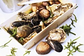 Various types of shellfish in crate
