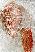 Scorpion fish fillet and fin on ice