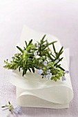Rosemary with flowers on white cloth