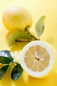 Lemons with leaves and blossom