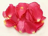 Rosa Rosenblütenblätter