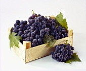Crate of table grapes