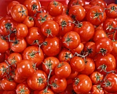 Vine tomatoes (filling the picture)