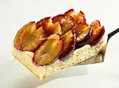 A piece of tray-baked plum cake on cake slice