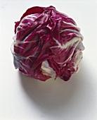 A head of radicchio (variety: Radicchio di Chioggia)